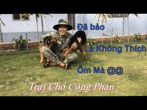 Trại Chó Công Phan_  Bán Hai Chú Chó Becgie Đức 4.5 tháng tuổi.