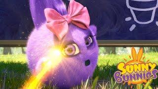 Sunny Bunnies | Escola mágica | Desenhos animados | WildBrain em Português