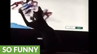 Sphynx cat attacks skaters on TV screen