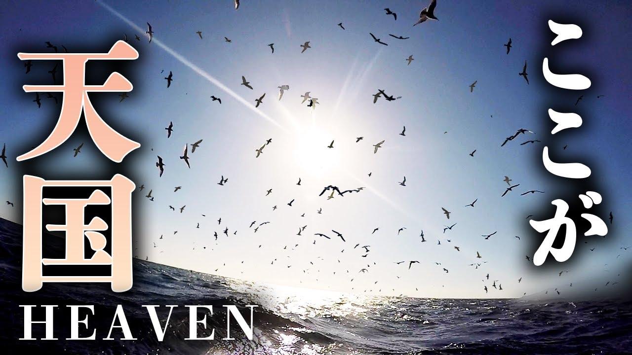 鳥山に突撃!100匹を超える巨大魚の群れに囲まれた!【魚突き】