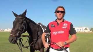 Polo Lesson, Polo Tuition, Essential Guide to Polo by Steve Thompson, Polo Coach, Polo Dubai, Polo