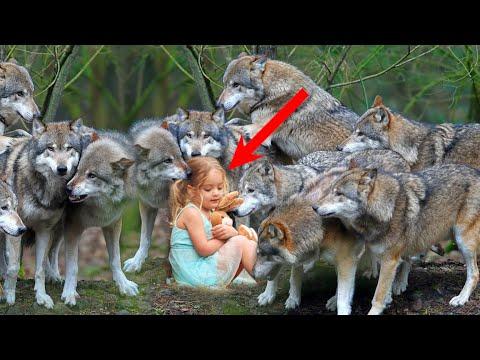 Окруженная голодными волками в лесу маленькая девочка ждала своего часа... Время шло на минуты...