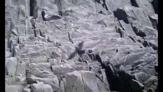 Курильские Острова - в море Видео №14 - сбор чаячьих яиц(, 2015-07-21T00:43:33.000Z)