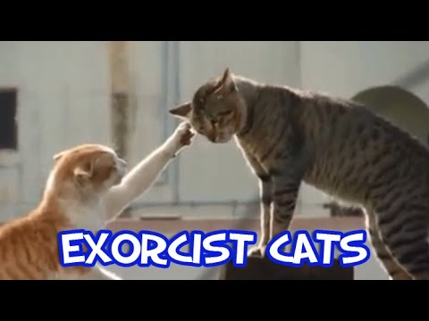 Exorcist Cat Part 1