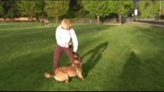 Schutzhund Equipment ~ French Linen Tug