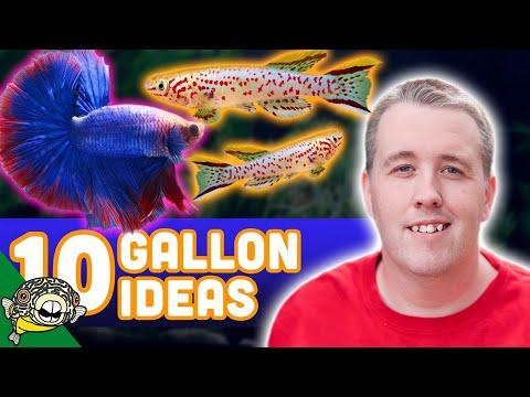 10 Gallon Aquarium Stocking Ideas - Tons Of Color!