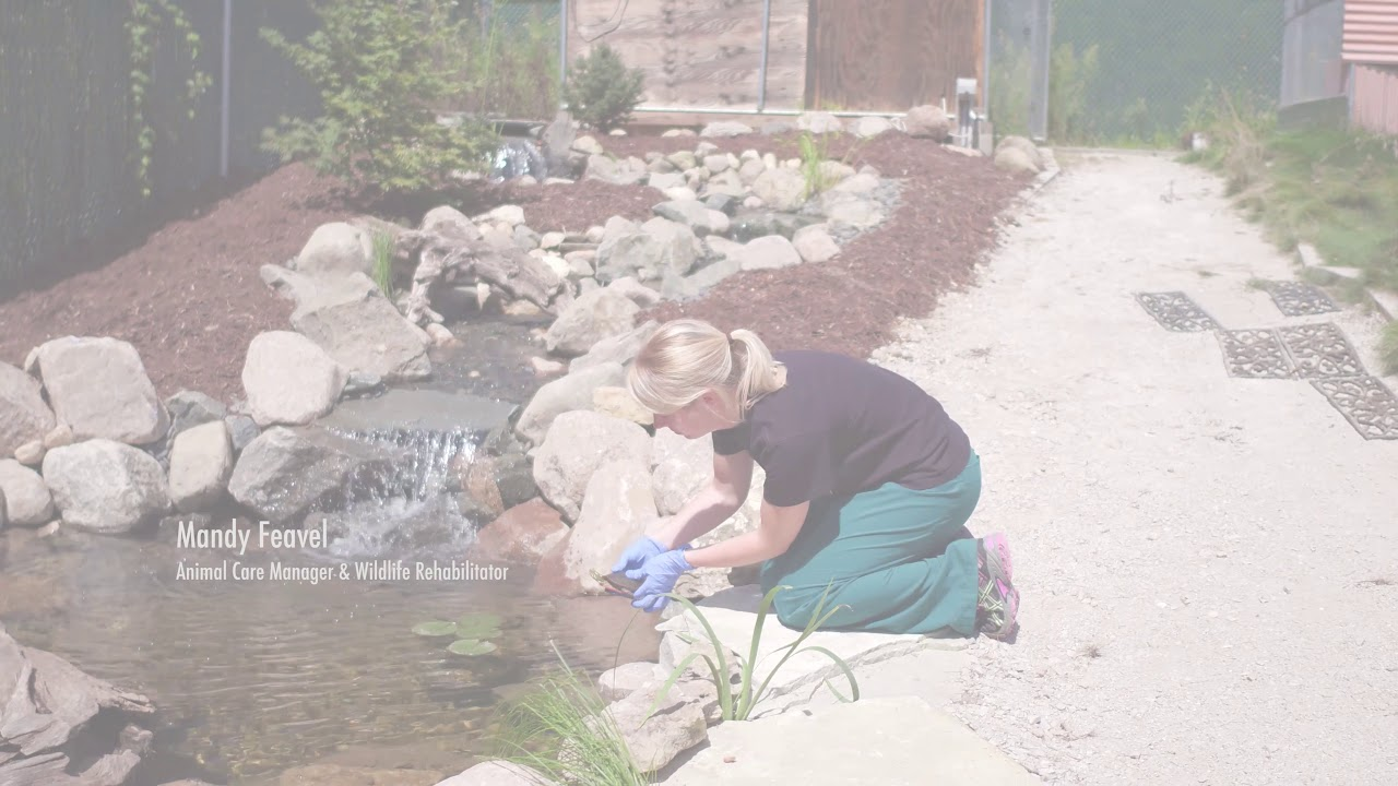 Turtle Rehabilitation Pond Build Video 2017