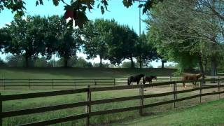 Greenville Sc / Riverbend Equestrian Center / Bush Realty Loving Greenville!
