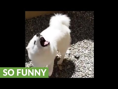 Water-loving dog goes nuts for the hose