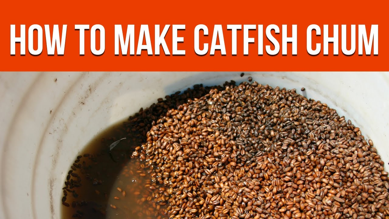 Best catfish chum recipe