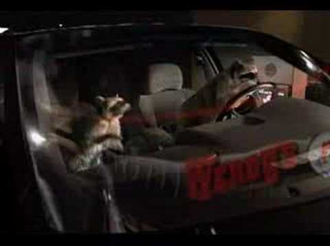 Wendy's Raccoon Commercial