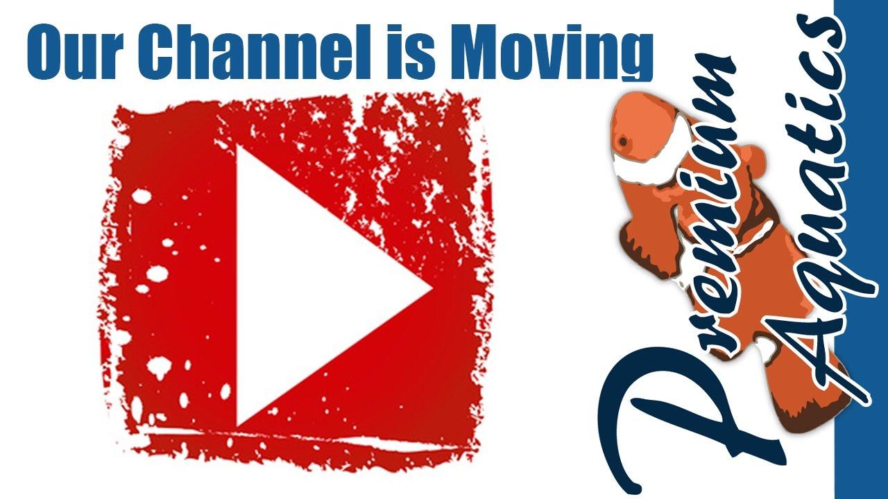 Image Result For Premium Aquatics Youtube