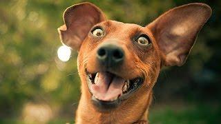 Коты и собаки издают забавные звуки