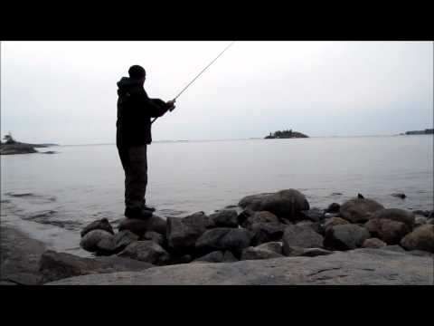 Siian onginta kevät 2012  Angling whitefish in Finland