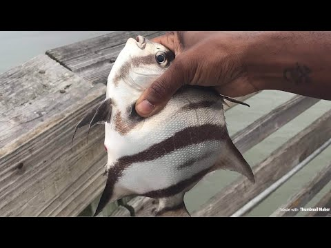 Multi Species Fishing With My Fiancee At Myrtle Beach South Carolina (Pier 14)
