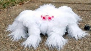 15 RAREST Spiders In The World!