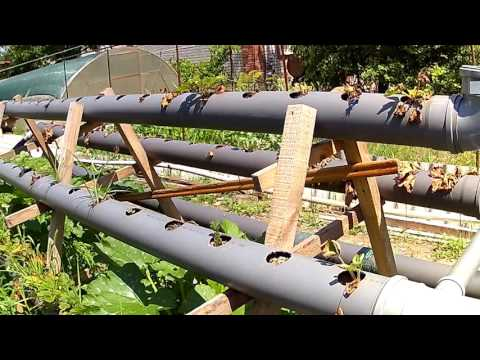 видео: клубника в трубах, ОШИБКИ!