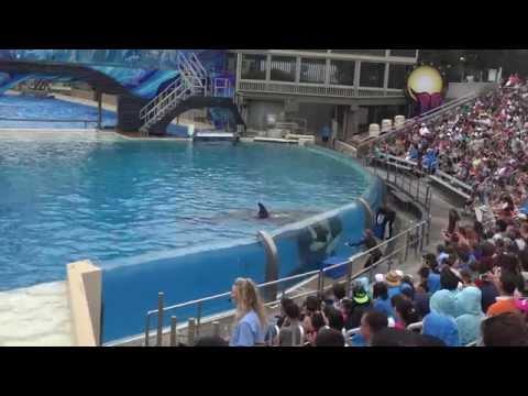 Sea World San Diego Shamu show August 2015 4K