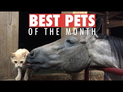Best Pets of the Month Video Compilation | March 2018