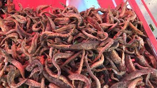 Most Unique Street Food in China   Different Types of Insects New 2017   