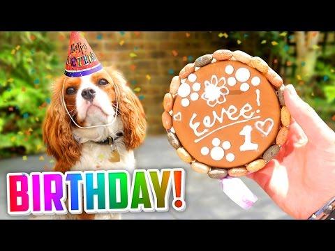 🐶 EEVEE'S 1st BIRTHDAY! (🎁 Presents, 🎂 Cake + 🎉 MORE!)