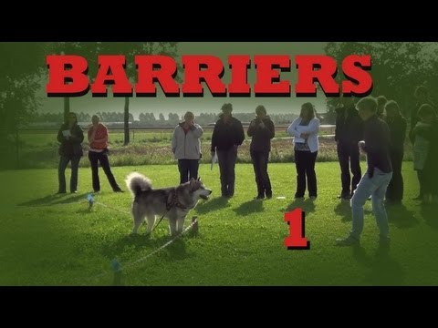 Teach your dog to stay in your yard- Invisible Barriers Part 1- Dog Training