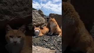 海辺の猫ちゃん