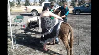 funny farm donkey ride
