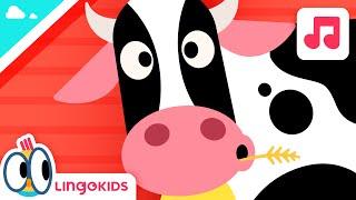 Old MacDonald Had a Farm - Nursery Rhymes | Lingokids - School Readiness in English