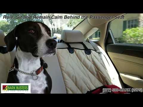 dog-behavior-training-vs-dog-obedience-training