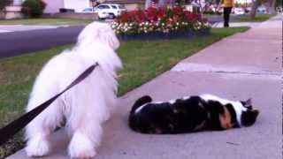Cats in our neighborhood seem to like our dog. They come greet him ...