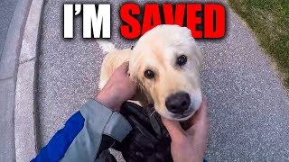 CUTE PUPPIES SAVED BY BIKERS | BIKERS ARE NICE | [EP. 86]