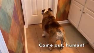 reuben-the-bulldog-give-me-a-minute
