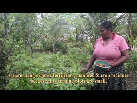 Organic Farming as a Solution for Pesticide Poisoning