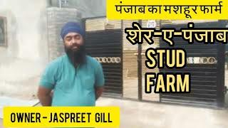 🐴Sher-e-Punjab Stud farm - आइए देखिए पंजाब का मशहूर स्टड फार्म(owner Jaspreet Gill)8847463686