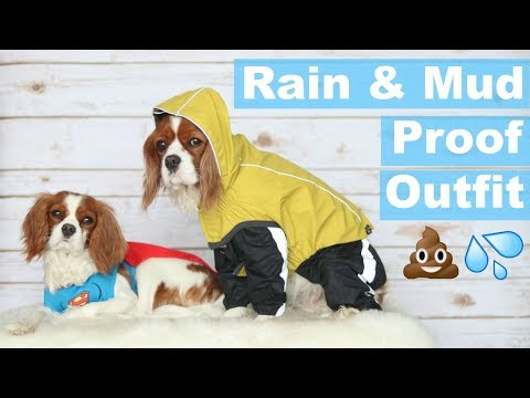 Keep Your Dog Clean and Dry | Waterproof & Mudproof | Cavalier King Charles