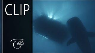 Kon-Tiki - Clip 3