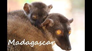 Madagascar - Road Trip - Tana - Majunga - Nosy be