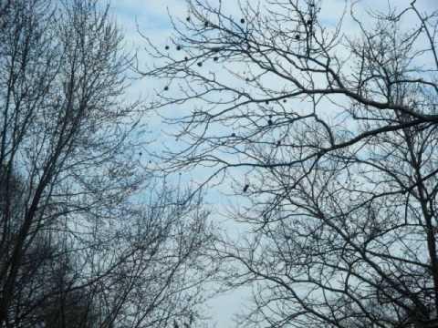 Heru Mertar Don't Go So Far Away - Al Di Meola mp3