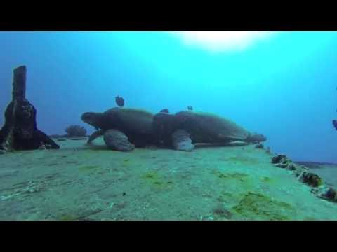 Scooter Diving Maui - Spooning Turtles!