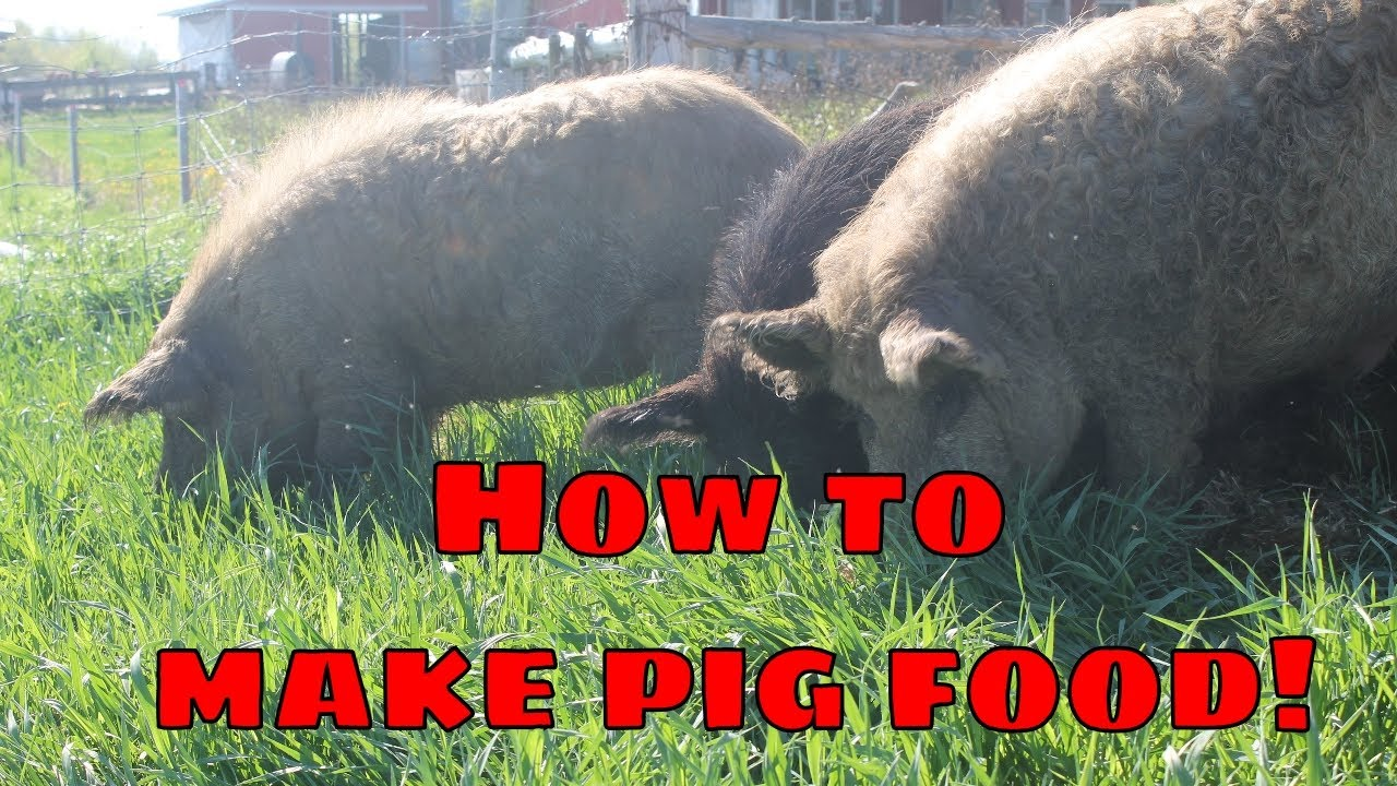 How do you make pig food? How to plant pig food forage on the homestead farm