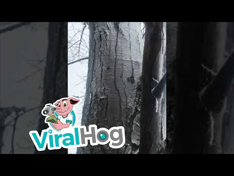 Watch this tree melt from the inside out