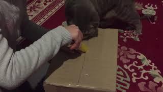 Purina one с спирулиной для нашего кота