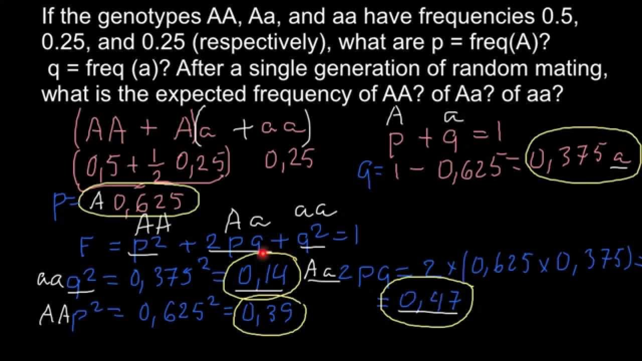 How To Find Expected Genotype Frequency Hardy Weinberg Formula