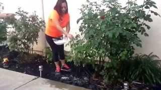 como quitar las plagas de las flores