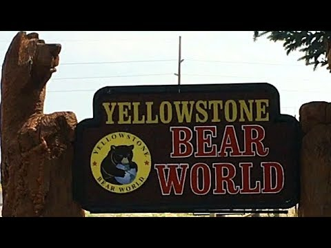 Yellowstone Bear World (RV Drive Thru WildLife Park) Rexburg Idaho