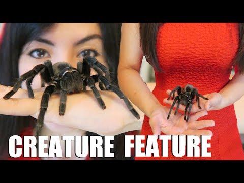 HUGE Tarantula!   Creature Feature   Brazilian Black Spider