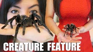 HUGE Tarantula!   Creature Feature   Brazilian Black Spider thumbnail