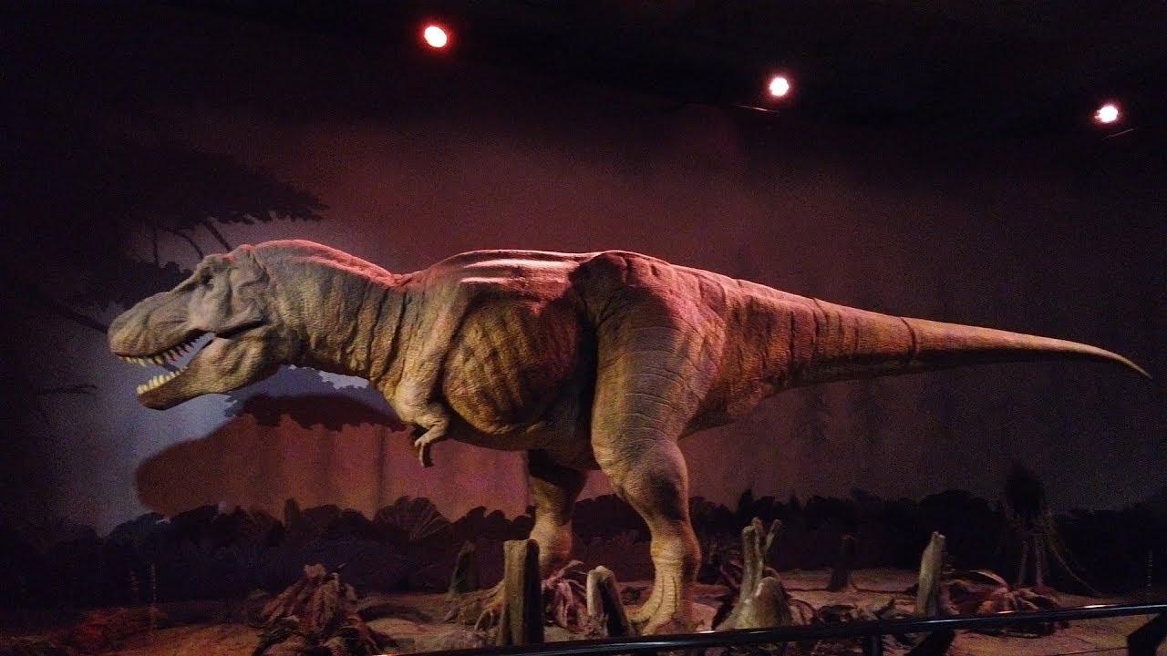 żarty z dinozaurami chłopak lub podłączenie