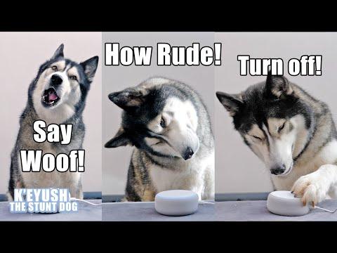 My Husky Talks to ALEXA And She Heard Him!